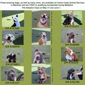 Contra Costa Dogs for Adoption